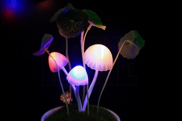 Đèn ngủ nấm Avatar